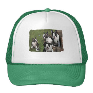 Boston Terrier Puppies Trucker Hat