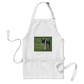 Boston Terrier Puppy Aprons