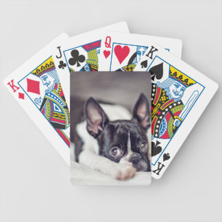 Boston Terrier Puppy Bicycle Playing Cards