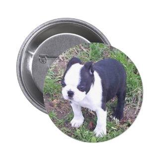Boston Terrier Puppy Button