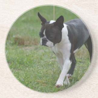 Boston Terrier Puppy Drink Coasters