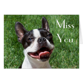 Boston Terrier Puppy Dog Miss You Greeting Card