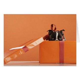 Boston terrier puppy in gift box card