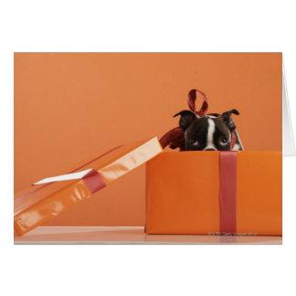 Boston terrier puppy in gift box card