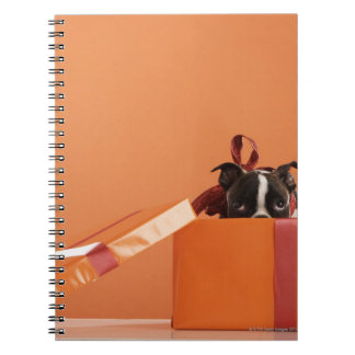 Boston terrier puppy in gift box notebook