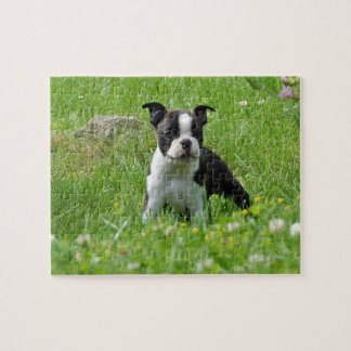 Boston Terrier Puppy in Meadow Puzzle
