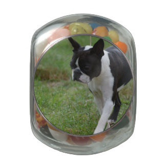 Boston Terrier Puppy Jelly Belly Candy Jar