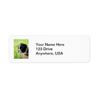 Boston Terrier Puppy Label