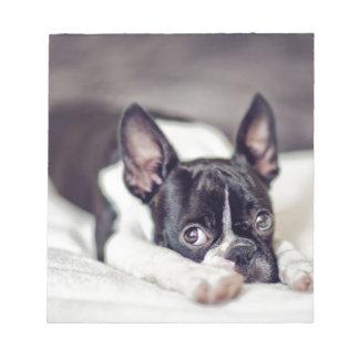 Boston Terrier Puppy Notepad