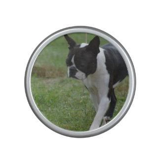 Boston Terrier Puppy Speaker