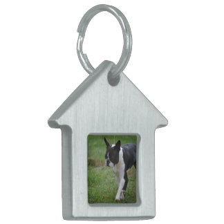 Boston Terrier Puppy Pet Name Tags