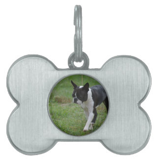 Boston Terrier Puppy Pet Tags