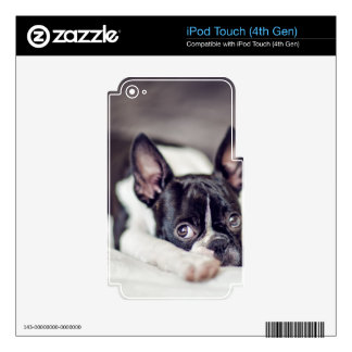 Boston Terrier Puppy Skins For iPod Touch 4G