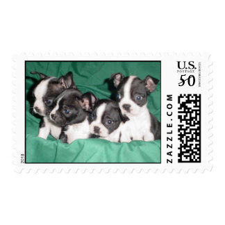 Boston Terrier pups postage