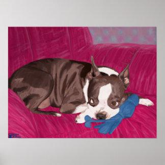 Boston Terrier que miente en un sofá rojo - Póster