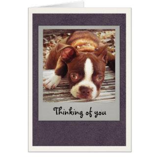 Boston Terrier que piensa en usted carda Felicitacion