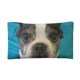 Boston Terrier que se sienta en cama
