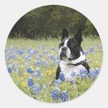 Boston Terrier que se sienta en un campo de capos Pegatinas Redondas