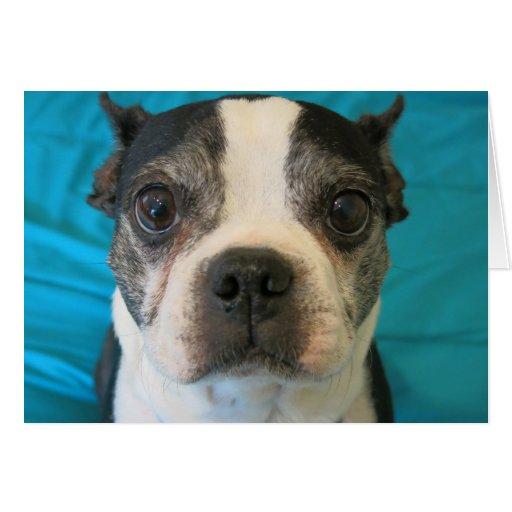 Boston Terrier que se sienta en una cama Tarjeta Pequeña