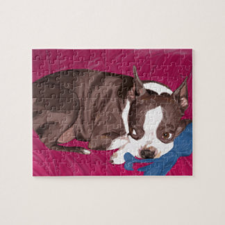Boston Terrier Resting on Red Couch -Digital Paint Jigsaw Puzzle
