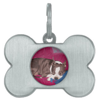 Boston Terrier Resting on Red Couch -Digital Paint Pet Tag