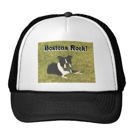 Boston Terrier:  Roca de Bostons Gorro De Camionero