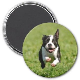 Boston Terrier Running Magnet