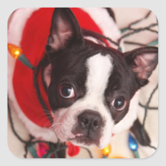 Boston Terrier Santa in Twinkling Lights Stickers