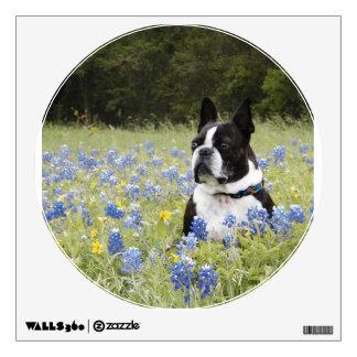 Boston Terrier sitting in a field of Blue Bonnets Wall Sticker