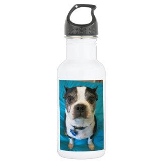 Boston Terrier sitting on a bed 18oz Water Bottle
