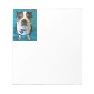 Boston Terrier sitting on a bed Note Pad