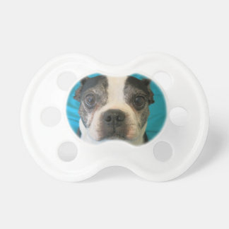 Boston Terrier sitting on a bed Pacifier