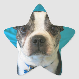 Boston Terrier sitting on a bed Star Sticker
