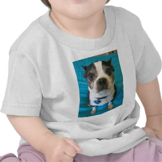 Boston Terrier sitting on a bed Tshirt