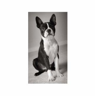 Boston Terrier Sitting Sculpture