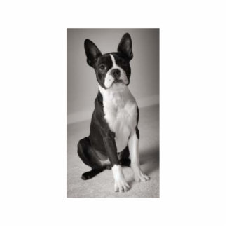 Boston Terrier Sitting Sculpture Acrylic Cut Outs