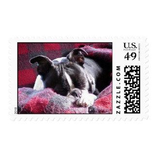 Boston Terrier:  Sleeping Beauty Postage