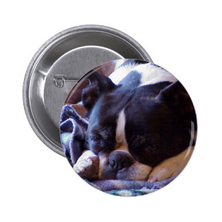 Boston Terrier:  Snoozer dulce Pins