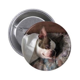 Boston Terrier snoozing Pinback Button