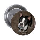 Boston Terrier:  Soy inocente Pin