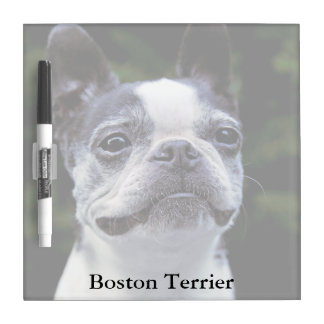 Boston Terrier Square Dry Erase Board