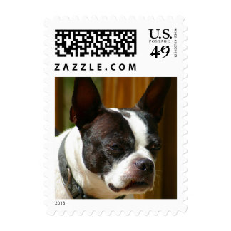 Boston Terrier Stamps