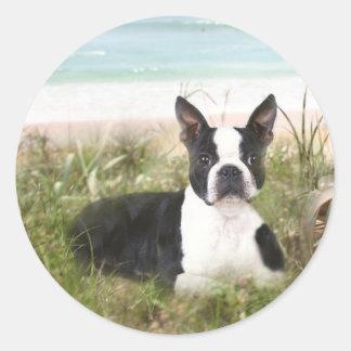 Boston Terrier Sticker Beachgrass