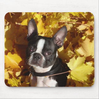 Boston Terrier Surrounded by Fall Leaves Mousepad