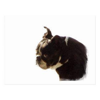 Boston Terrier:  Sweet Profile Postcard