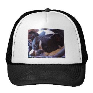 Boston Terrier:  Sweet Snoozer Trucker Hat