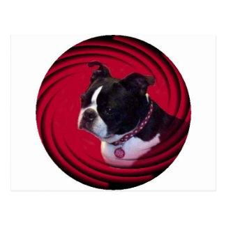 Boston Terrier:  Swirl Postcard