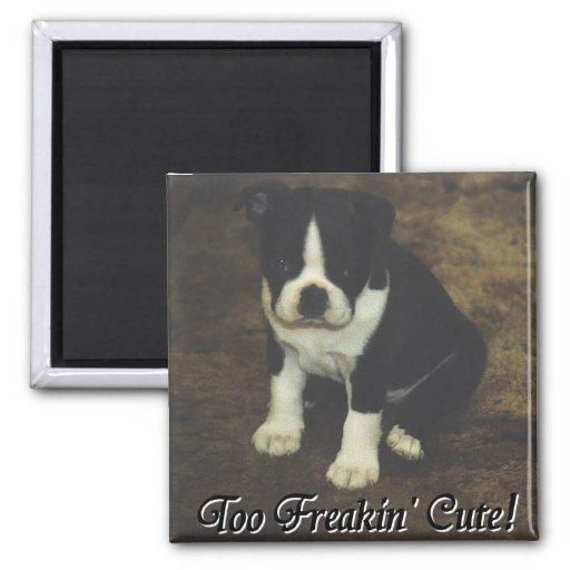 Boston Terrier:  También Freakin lindo Imán Cuadrado