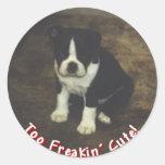 Boston Terrier:  También Freakin lindo Pegatina Redonda