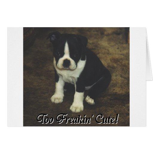 Boston Terrier:  También Freakin lindo Tarjeta De Felicitación